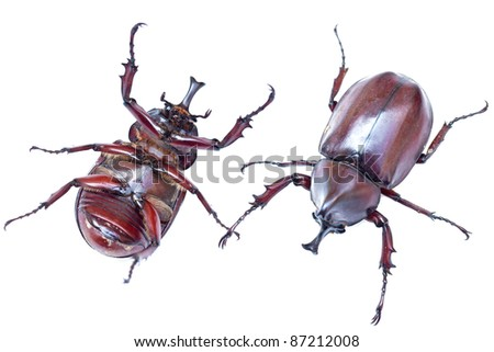 Closeup stag beetle isolated on white