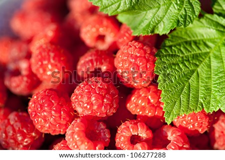 Closeup sweet raspberries. Natural light