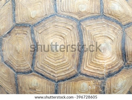 Closeup texture of turtle carapace.