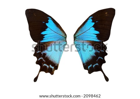 Closeup view of blue butterflywings isolated on a white background