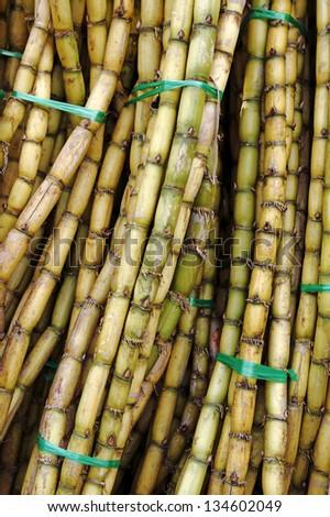 Closeup view of bundles of freshly harvested sugar cane stalks.