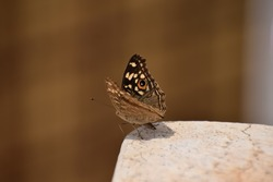 Closeup view of Butterfly ready to take off