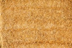 Closeup view of golden straw background