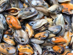 Closeup view of  of fresh frozen mussel meat, mussels without shell, Boiled mussels in a plate, Peeled mussels, Freshly-frozen mussels,  is ready to be cooked, Fresh Mussel shells lie on the plates.