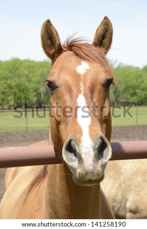 closeup view of the head of a brown horse with white markings