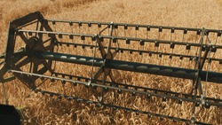 Closeup view of the rotary straw walker of a modern combine harvester cutting and threshing ripe wheat grain. Gathering crops using the agricultural machinery on the field during the daytime.