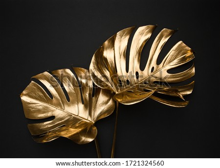 Closeup view of two luxurious golden painted tropical monstera leaves artistic composition. Abstract black background isolated. Creative jewelry concept.