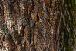 Closeup view photography of texture of bark of old huge tree growing outdoor in sunny spring forest.