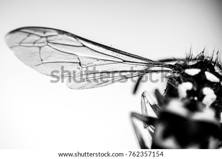 Closeup wasp wings. Insect background with copy space. Shallow focus Stock fotó ©