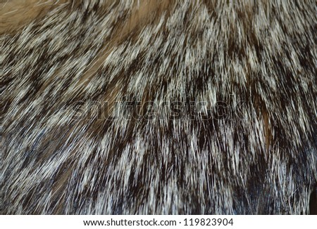Closeup wolf fur texture to background