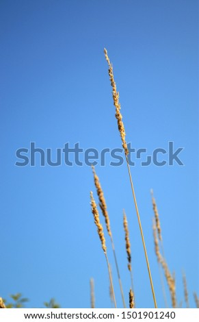 Closeups of various foliages and grasses of different colours