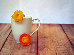 Closup yellow straw flowers with white cup on wooden white background, macro image ,stilllife for card design