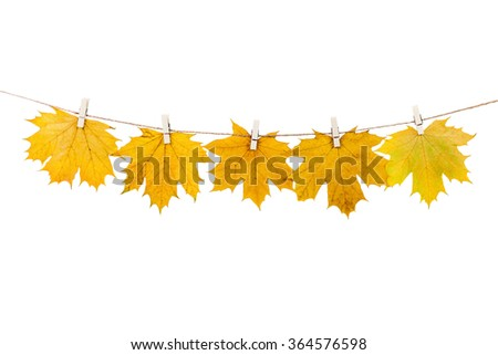 clothespins on the rope holding autumn leaves on a white background #364576598