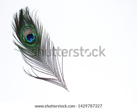 Clothing and home decoration. Peacock feather on white background. #1429787327