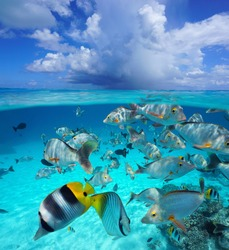 Cloud above sea surface with tropical fish underwater, seascape over and under water, Pacific ocean, French Polynesia, Oceania