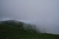 Cloud envelops dense coniferous deciduous forest. Beautiful atmospheric mystical landscape in National Park of Russia. Forest and mountains in fog in cloudy weather.