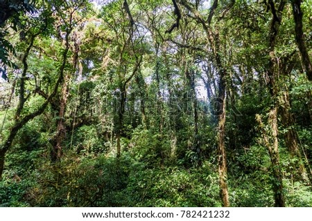 Cloud forest covering Maderas volcano on Ometepe island, Nicaragua