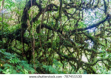 Shutterstock Cloud forest covering Maderas volcano on Ometepe island, Nicaragua