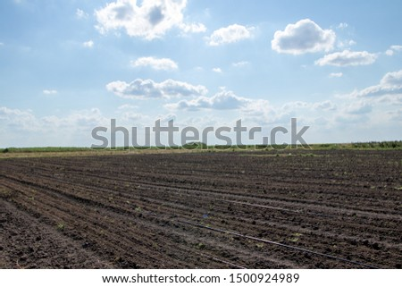 Clouds and field  , Watering the field