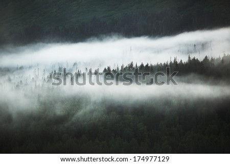 Clouds over Forest Detail - Turnagain Arm, Anchorage, Alaska, USA