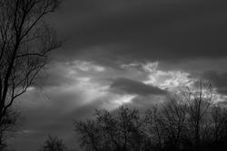clouds tree blackandwhite sky nature