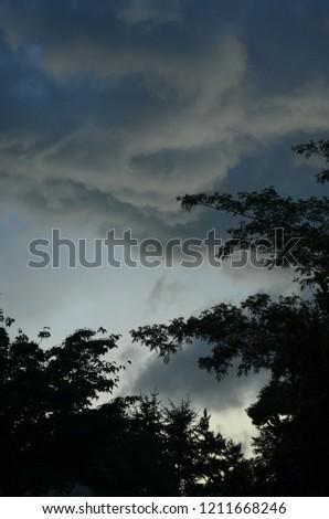 clouds tree fog #1211668246