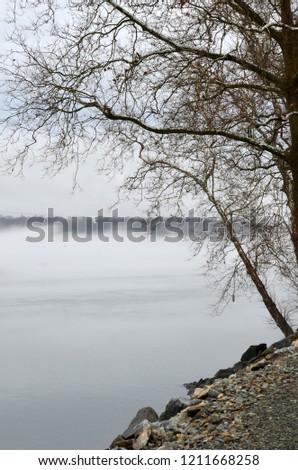 clouds tree fog #1211668258