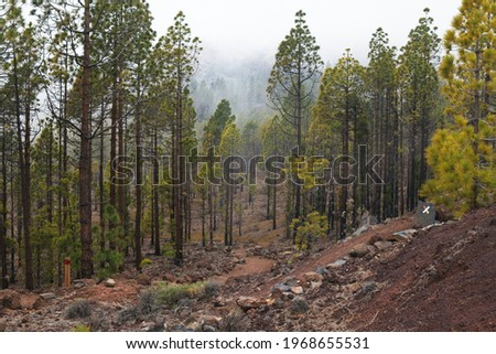 Cloudy and foggy day at forest of Paisaje Lunar, Tenerife, altitude is 1963 m,  area mostly covered by clouds, one of favourite places of hikers Foto stock ©