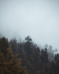 Cloudy forest on mountain side.