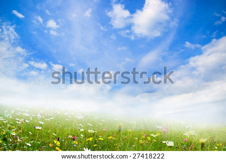 cloudy sky and grass