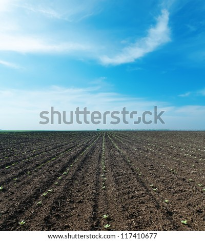 cloudy sky and spring field