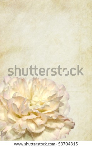 Clove-pink flower over grungy vintage background. Detailed texture. Copy-space.