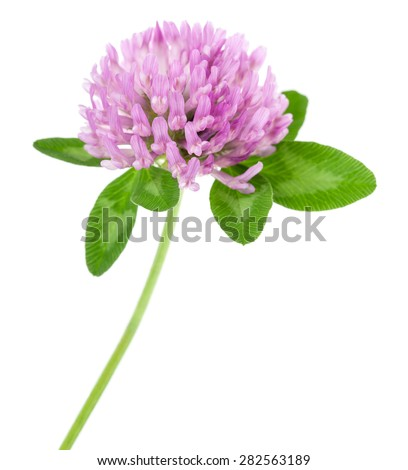 clover flowers isolated on white #282563189