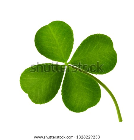 Clover leaf four-leaf isolated on white background close-up. #1328229233