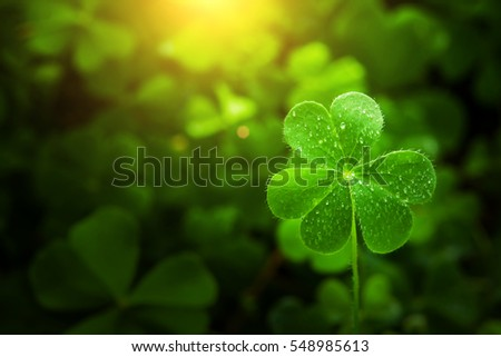Stock Photo clover leaf in lens flare for background