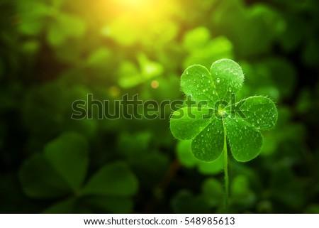 clover leaf in lens flare for background