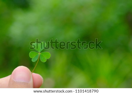 Clover leaf on hand for Green background with shamrock for lucky , Green background with three-leaved shamrocks. St. Patrick's day holiday symbol.