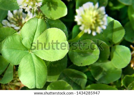 clover leaf with four leaves for good luck #1434285947