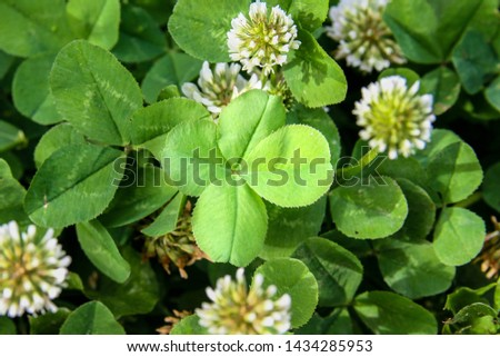clover leaf with four leaves for good luck #1434285953