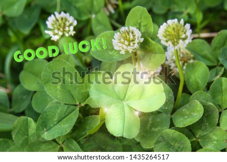 clover leaf with four leaves for good luck #1435264517