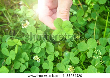 clover leaf with four leaves for good luck #1435264520