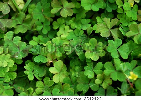 clover leaves texture