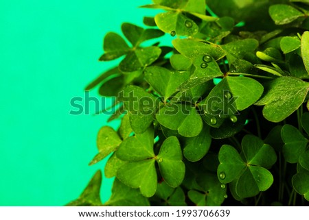 clover plant close up and green background
