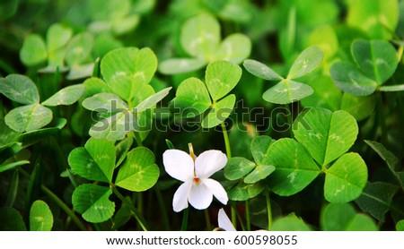 Clover St. Patrick's Day\n