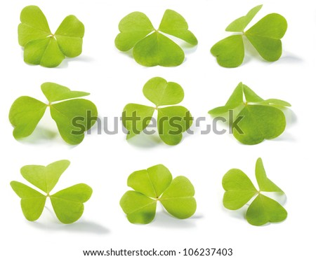 Clover (Wood-sorrel) isolated on white. For use in St. Patrick's Day themes. Oxalis acetosella (lat.). Shallow depth of field. - stock photo