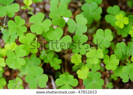 Clovers for backgrounds