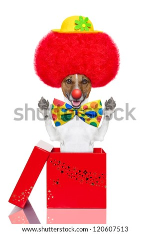 clown dog with red wig and hat jumping out of the box