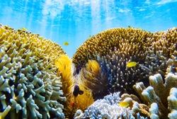 Clownfish anemonefish in underworld  - Image