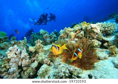 Clownfishes and Scuba Divers