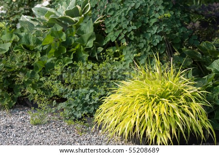 Clump of vibrant colored ornamental grass in a border for Ornamental grass border plants